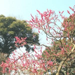 koishikawa2