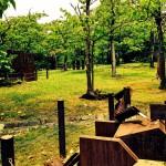 大阪で過ごす休日、天気のいい日は万博記念公園へ