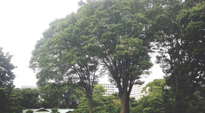日本で最も手入れが行き届いた美麗な公園、皇居東御苑