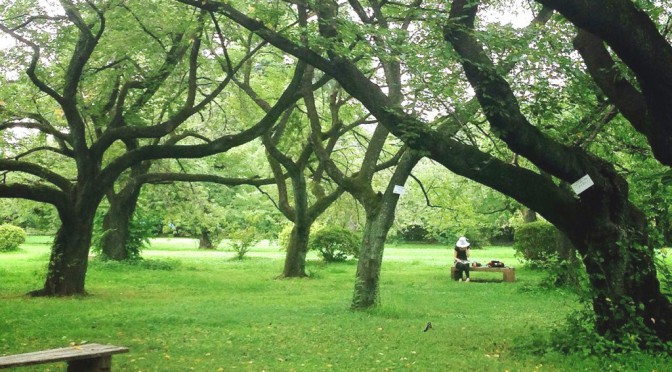 都会のジャングル、小石川植物園で贅沢なランチタイム