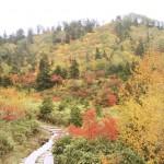 秋の紅葉を先取り、立山の弥蛇ヶ原高原へ