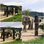 京都でコンパクトな散歩コース、京都市動物園
