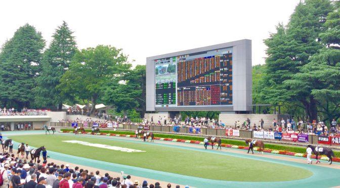 またまた行ってしまった東京競馬場、馬に癒される
